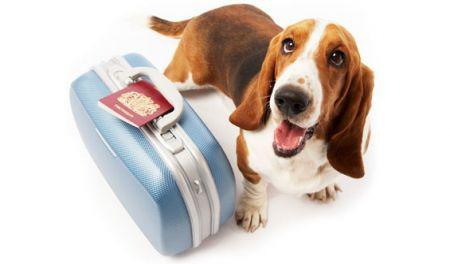 vacanza puglia cane
